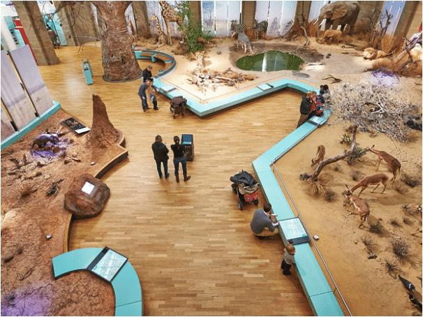 Gesellschaftsspieletag im Museum Koenig 2017